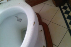 toilet1_before